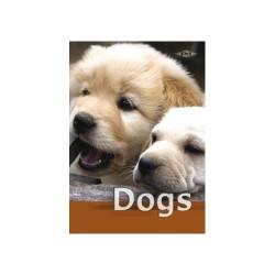 Füzet pd kisalakú 16-32 vonalas Dogs I.