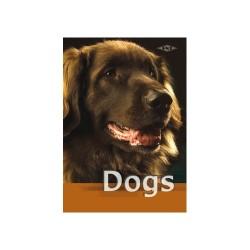 Füzet pd kisalakú 16-32 vonalas Dogs II.