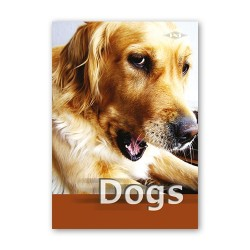 Füzet MT kisalakú 20-32 sima dogs