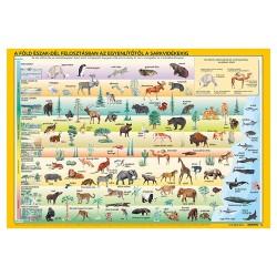 Könyöklő Stiefel 66x45 cm Világ állatai/állatok élőhelye duo