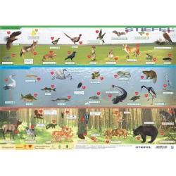 Könyöklő Stiefel 30x40 cm Magyarország vadon élő állatai / Magyarország állatvilága A3 könyöklő duo